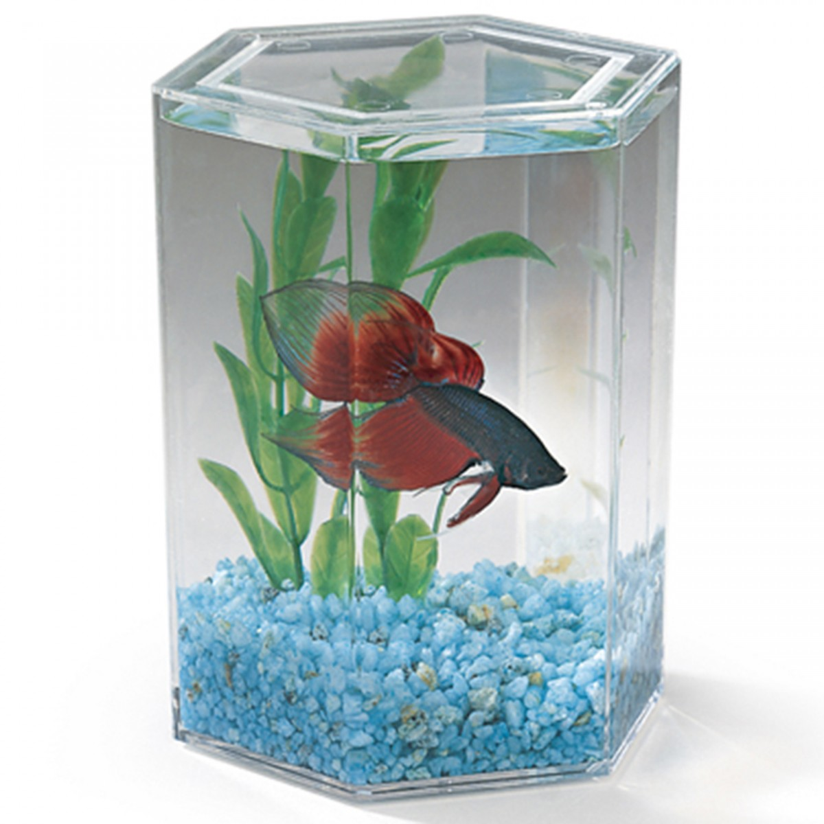 Lee 39 s hexagon betta keeper small for The fish 95 5