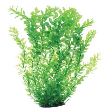 Underwater Treasures Green Cardamine - 24""