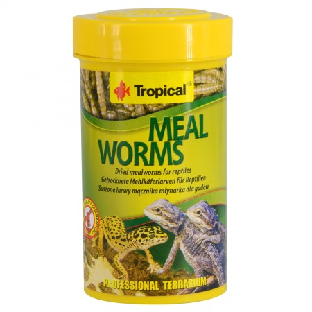 Tropical Dried Meal Worms