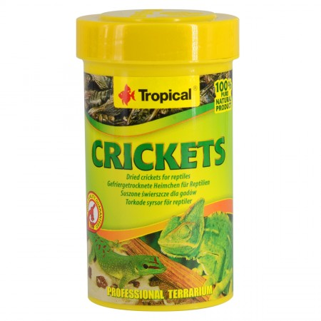 Tropical Dried Crickets