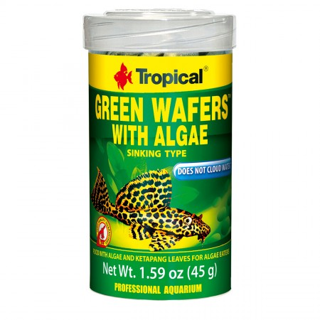 Tropical Green Wafers with Algae