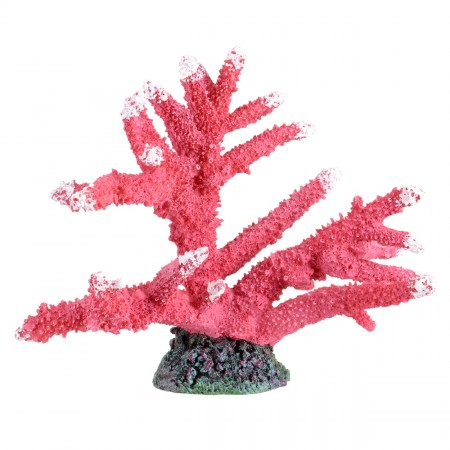 Underwater Treasures Branch Corals