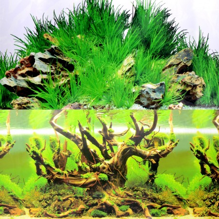 Underwater Treasures Grassy Tree/Grassy Boulder Reversible Backgrounds