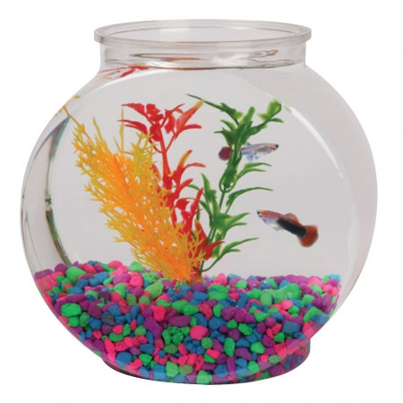Tom Aquatics Plastic Goldfish Bowls