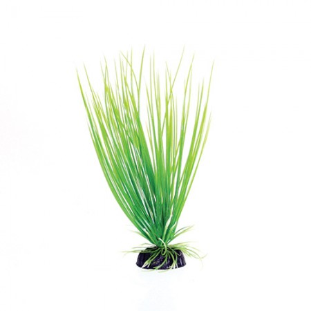 Underwater Treasures Green Hairgrass
