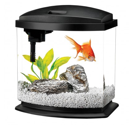 Aqueon MiniBow LED Desktop Aquarium Kit