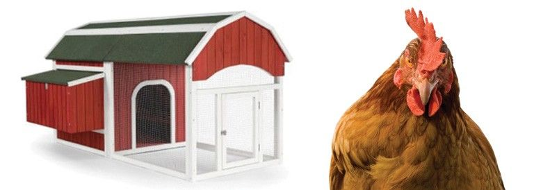 How Big Al's Can Help You Start Your Own Backyard Chicken Coop