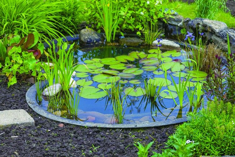 Opening Your Pond Step-By- Step