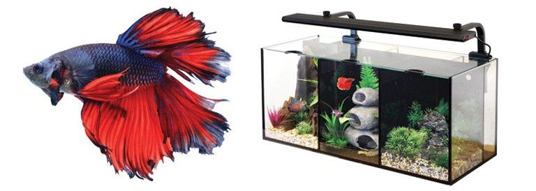 How to Select a Betta Tank