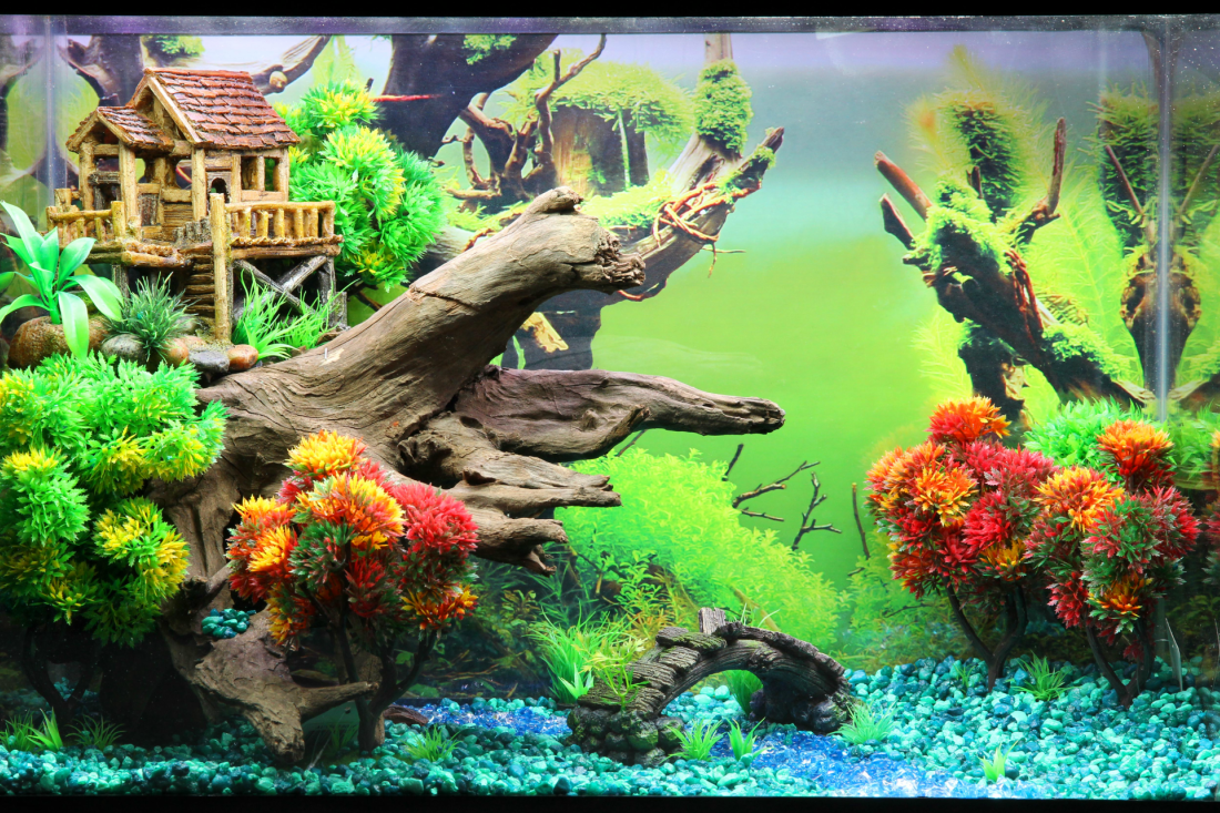 Themed Aquarium of the Month April 2017 - Tree Top Terrace