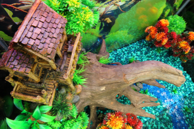 Themed Aquarium of the Month April 2017 - Tree Top Terrace - Aerial View