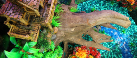 Themed Aquarium of the Month - Tree Top Terrace