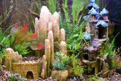 Themed Aquarium of the Month August 2017 - Doom City - Full View