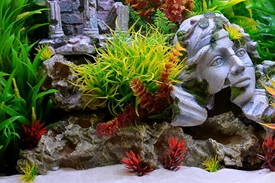 Full View - Natural Style Roman Ruins - Big Al's Pets Themed Aquarium of the Month June 2017