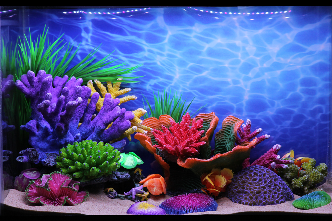 Themed Aquarium of the Month - Sunny Shallows