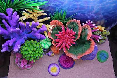 Themed Aquarium of the Month - Sunny Shallows - Image 3
