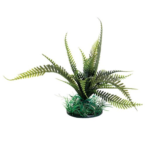 Underwater Treasures Olive Green Weeping Fern - 6 inch