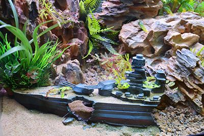 Themed Aquarium of the Month May 2017 - A Place Of Warship - Shipwreck Rear