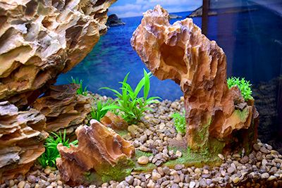 Themed Aquarium of the Month September 2017 - Canyon Island - Jagged Stones