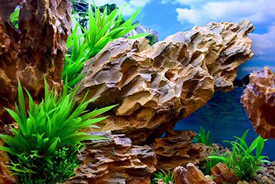 Themed Aquarium of the Month September 2017 - Canyon Island - Jagged Cliff