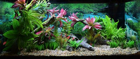 Themed Aquarium of the Month - April 2018 -  Jungle Junk