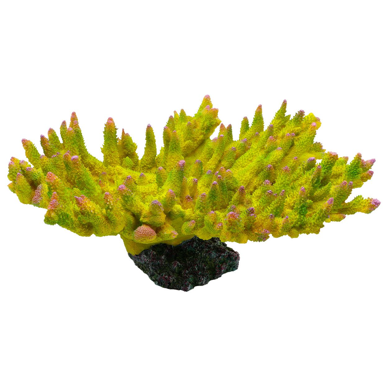 Underwater Treasures Acropora Coral - Envy