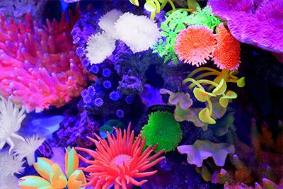 Themed Aquarium of the Month August 2018 - Coral Constellations