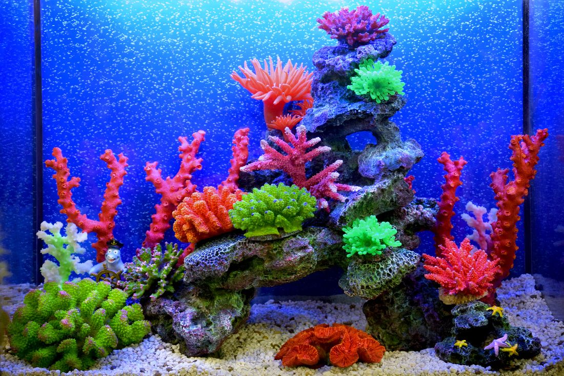 Themed Aquarium of the Month December 2018 - Coral Cheer!