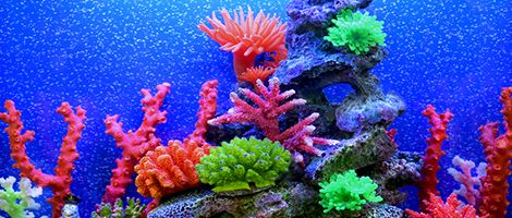 Themed Aquarium of the Month December 2018 - Coral Cheer