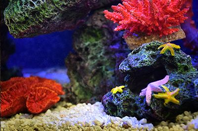 Themed Aquarium of the Month December2018 - Coral Cheer!