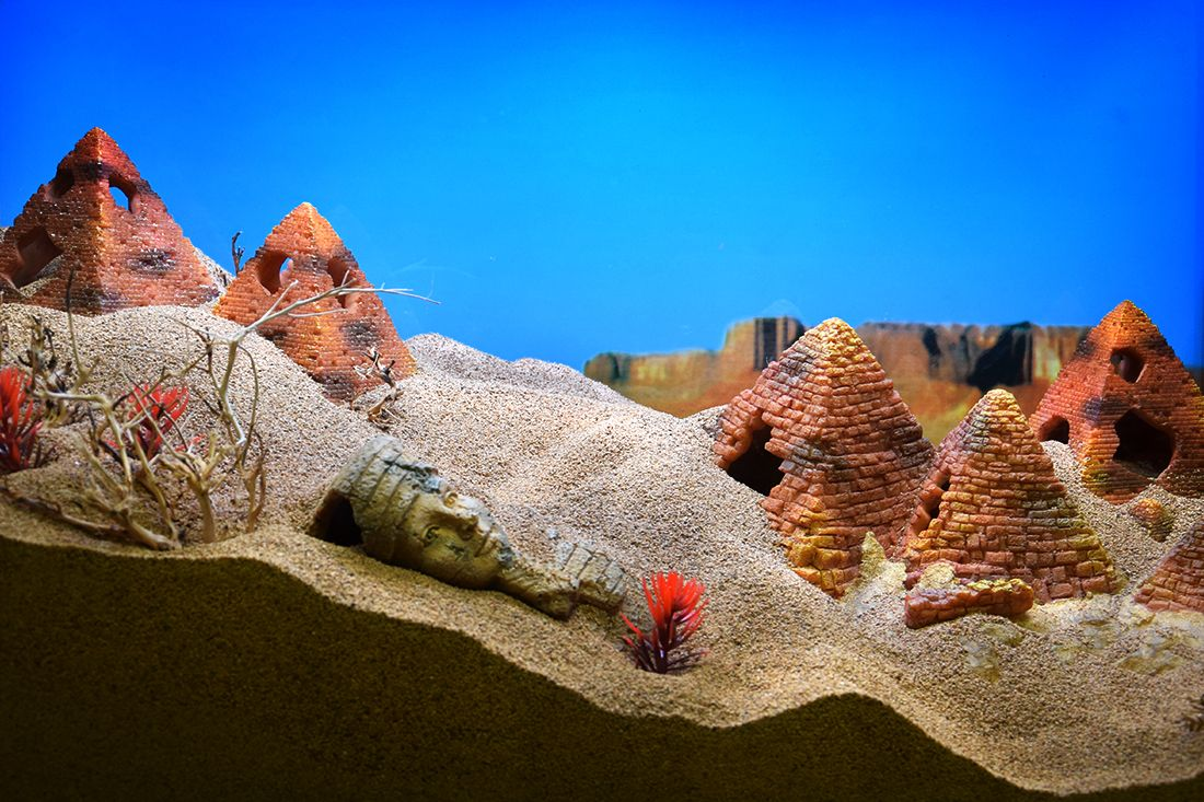 Themed Aquarium of the Month February 2018 - Deserted Desert Dunes