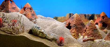 Themed Aquarium of the Month - February 2018 - Deserted Desert Dunes