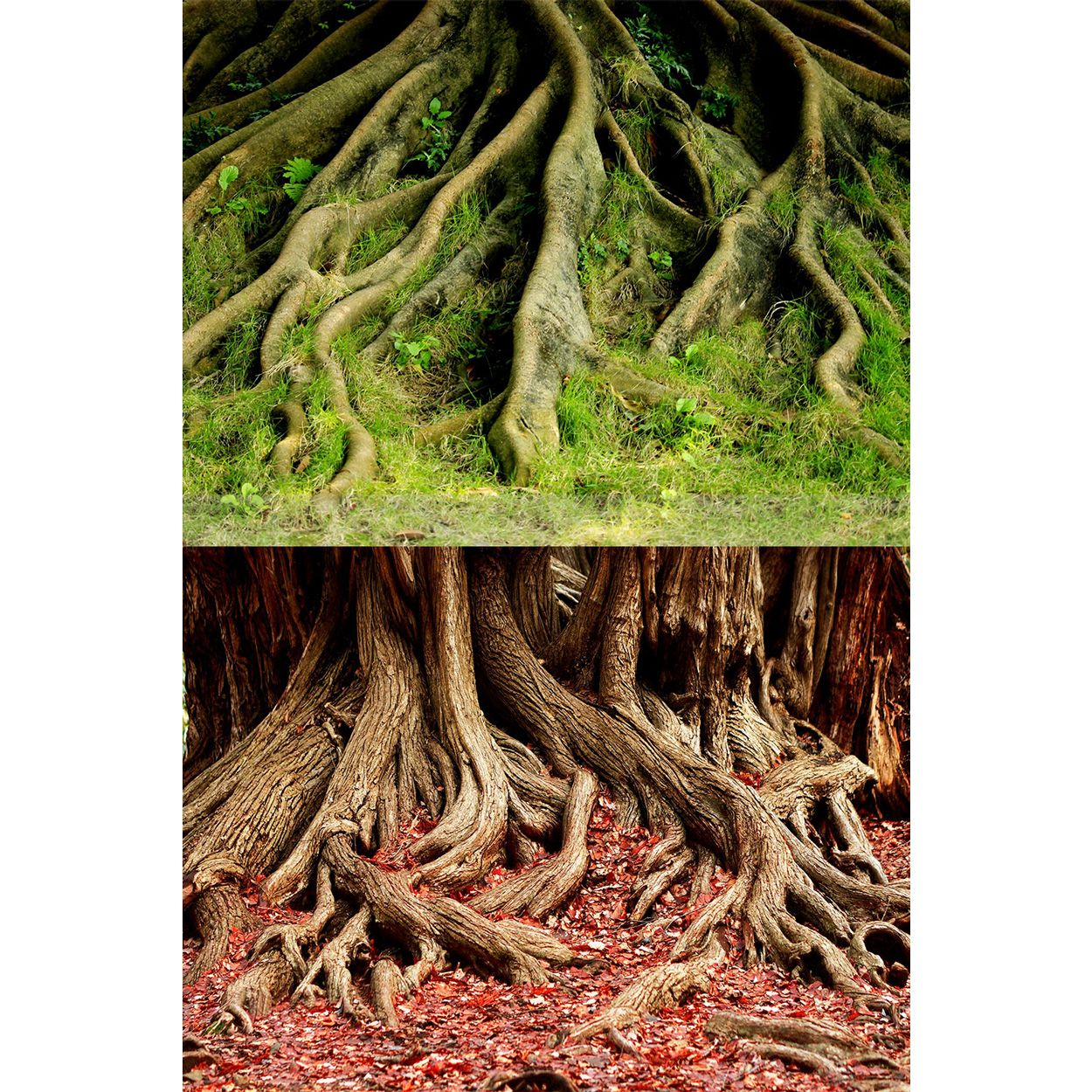 Underwater Treasures Amazon Root/Grassy Root Reversible Background - 20 inch (Sold by the Foot)