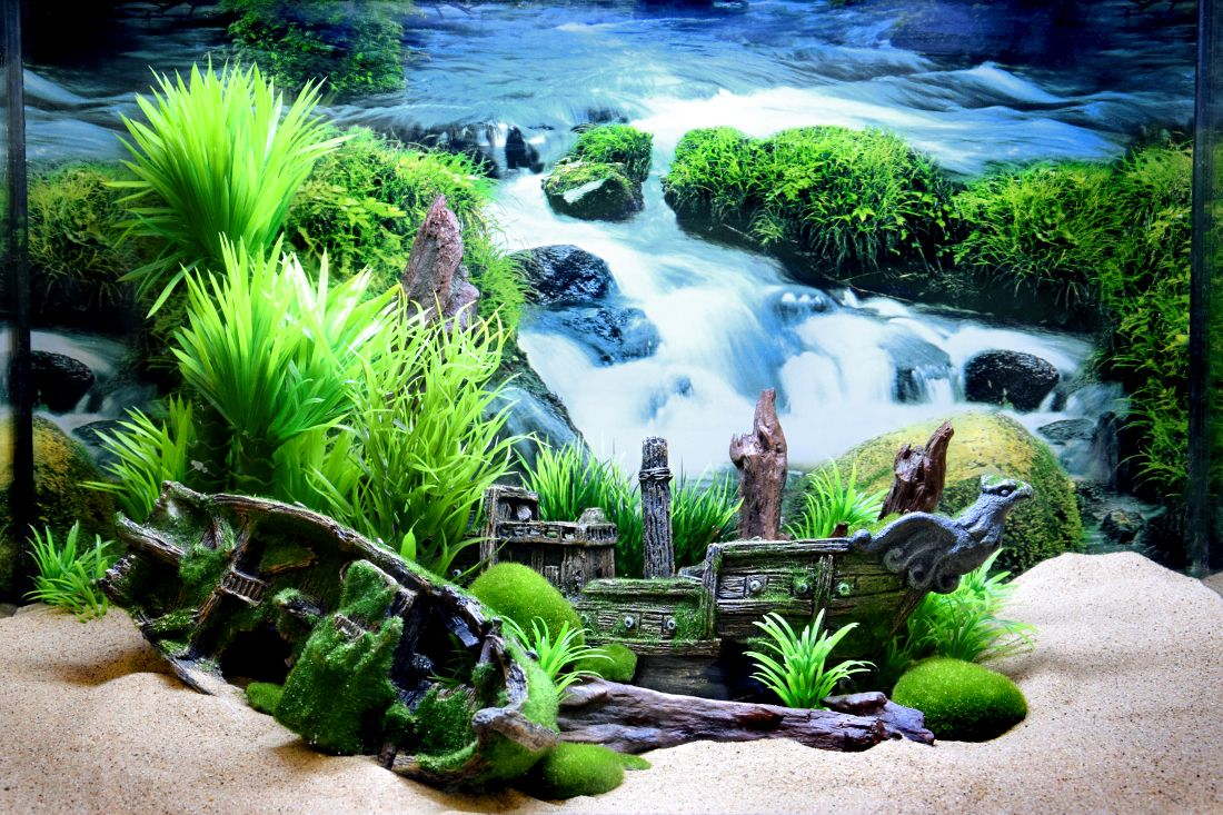 Themed Aquarium of the Month July 2018 - Mossy Marooned Marsh