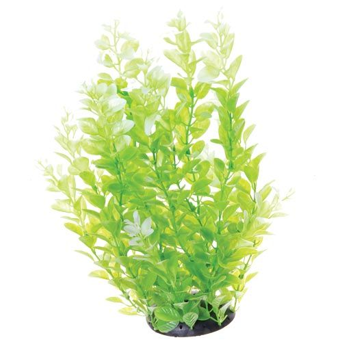 Underwater Treasures White Tipped Cardamine - 12 inch
