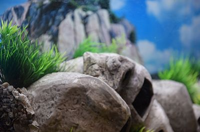 Themed Aquarium of the Month May 2018 - Cichlid Condos