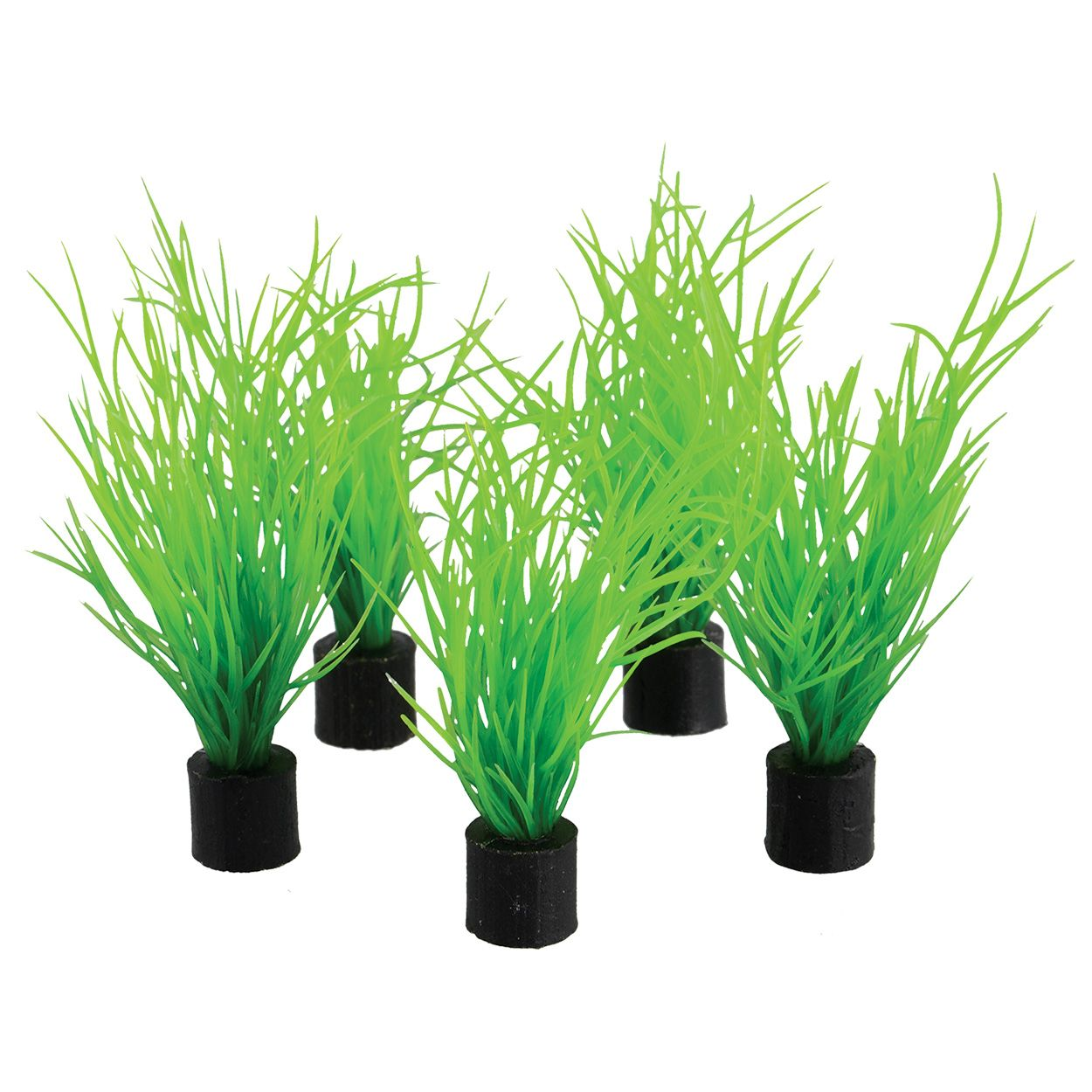 Underwater Treasures Bog Grass Mini Plant - 3 inch (5 pk)