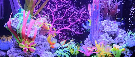 Themed Aquarium of the Month October 2018 - Rainbow Reef