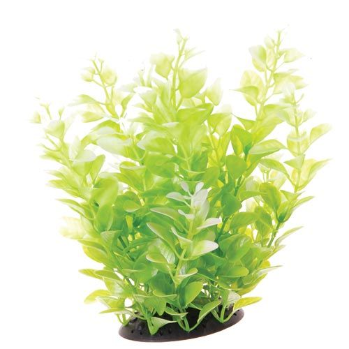 Underwater Treasures White Tipped Cardamine - 10 inch