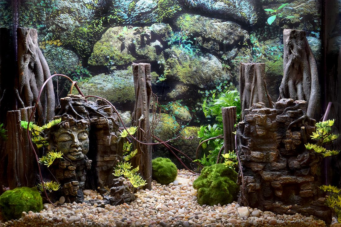 Themed Aquarium of the Month February 2019 - Faces in Stone!