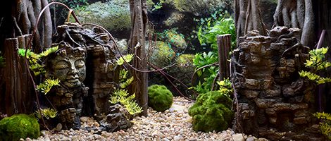 Themed Terrarium of the Month February 2019 - Faces in Stone