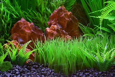 Themed Aquarium of the Month March 2019 - Shrimpin' ain't easy!
