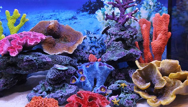 Themed Aquarium of the Month Image 2