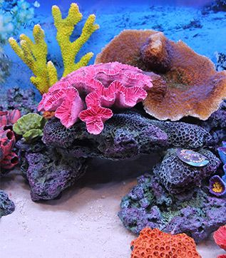 Themed Aquarium of the Month Image 4