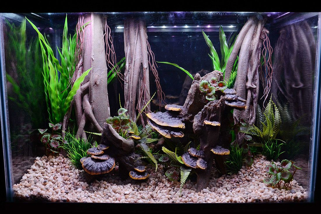 Themed Aquarium of the Month - Dryad's Den