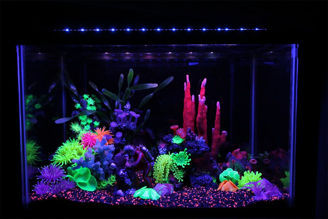 Themed Aquarium of the Month - Crystal Coral Cavern