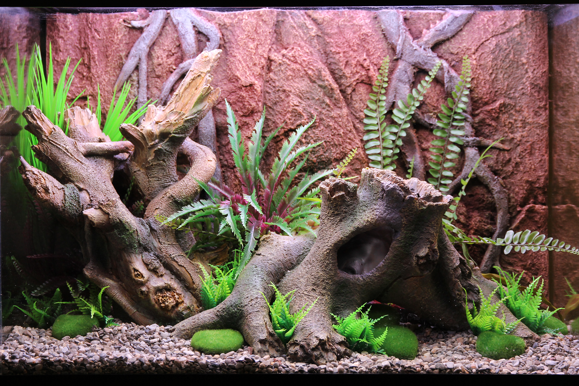 Themed Aquarium of the Month - Cryptic Creek