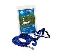 Collars, Leads & Tags