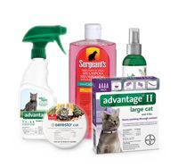Cat Flea and Tick
