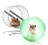 Small Animal Wheels & Exercisers